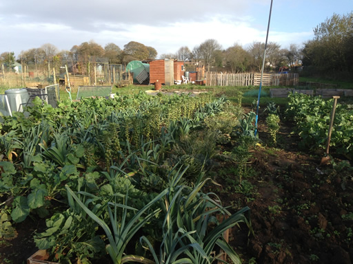 Bisley Allotments are Growing