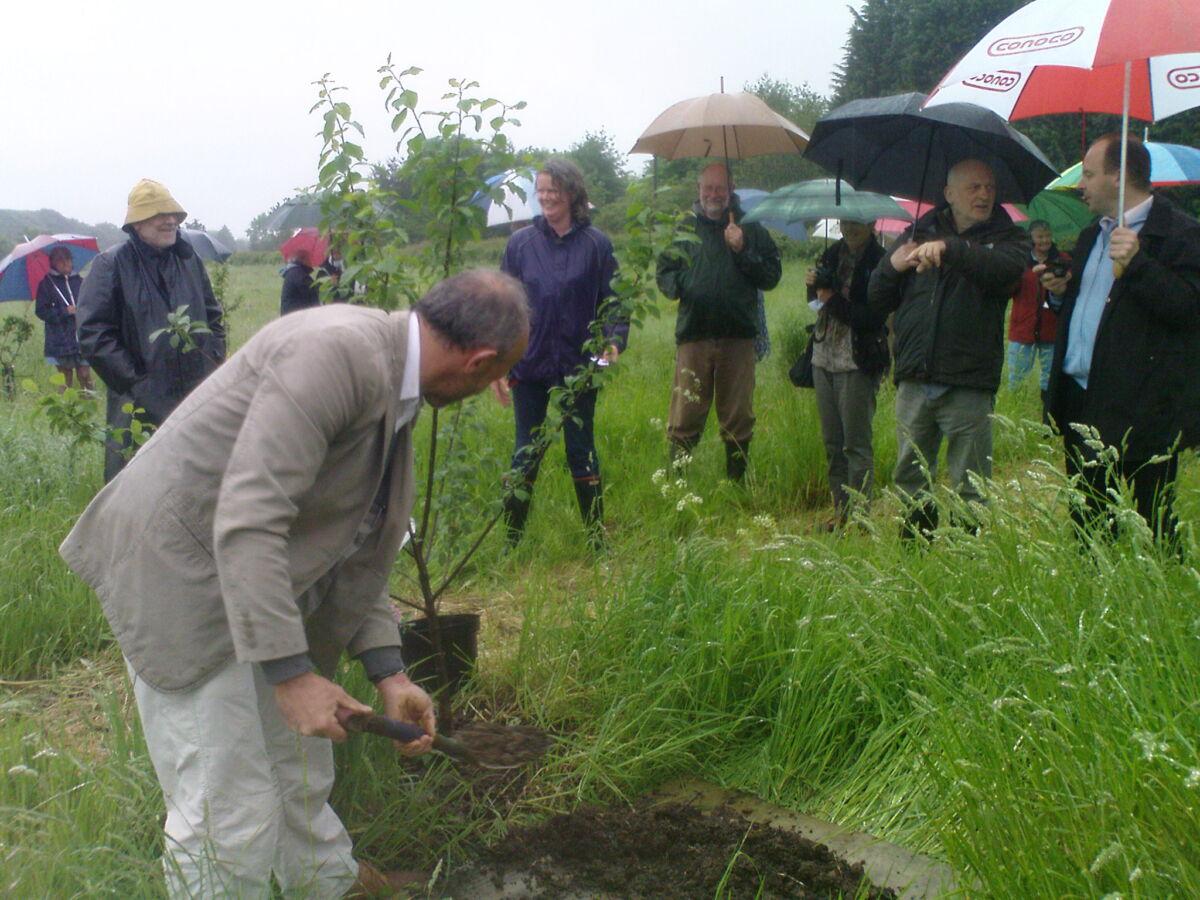 The Mayor of Plessala planting a greengage tree